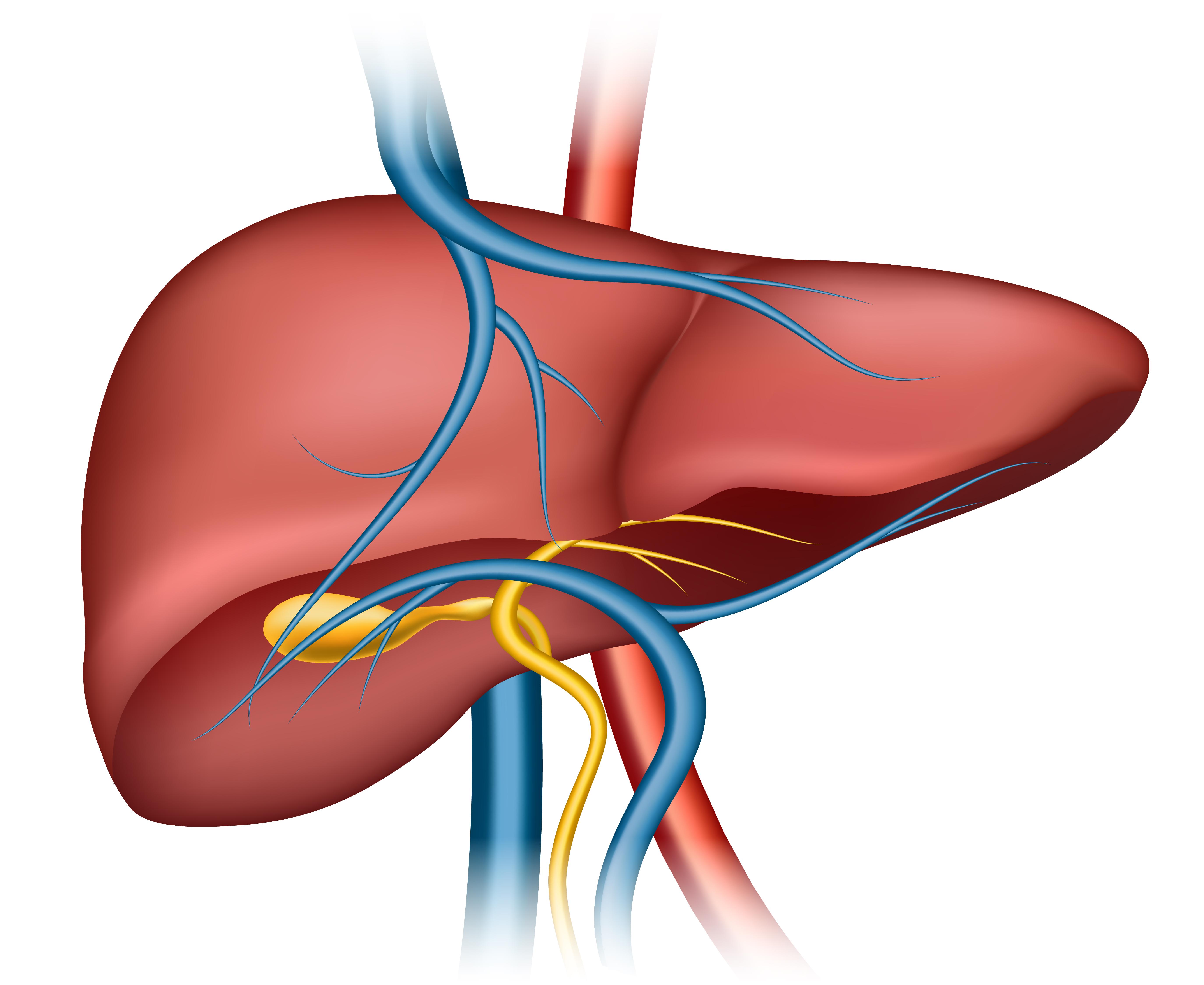 Ayurveda for liver care